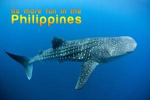 Philippines Cebu Whale Shark
