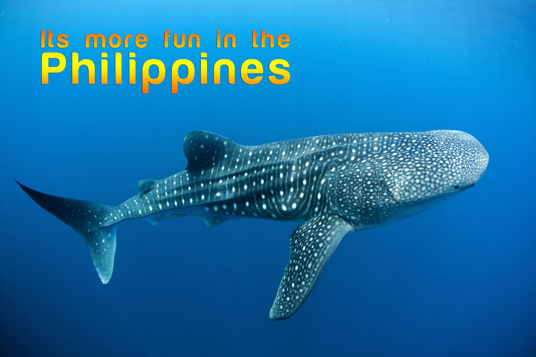 oslob whale shark watching cebu city tour