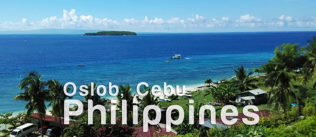 Oslob Whale Shark Watching Cebu City Tour