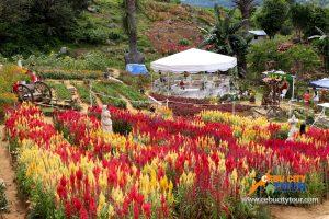 Cebu Flower Garden - Sirao