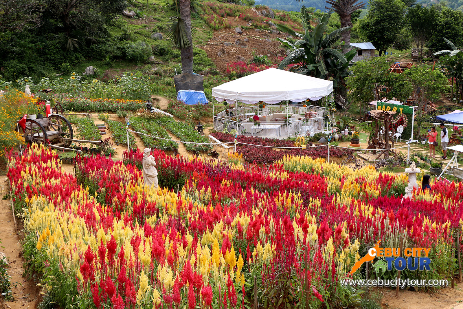 Cebu Sirao Flower Farm