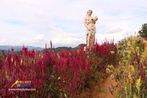 Cebu Flower - Cebu Sirao Flowers
