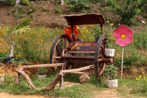 Cebu Flower Tours