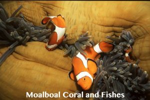 Moalboal-corals-fishes