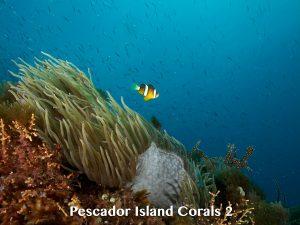 Pescador Island reef and corals