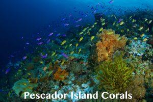 Pescador Island Corals