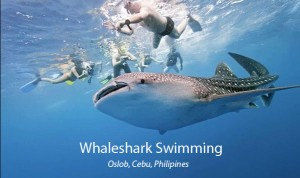 Cebu Oslob Tour - Cebu Whaleshark Tour