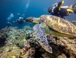 Pescador Island Turtle