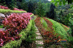 Terrazas De Flores Busay Flowers