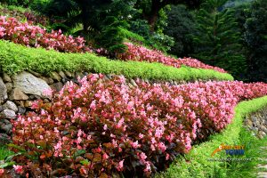 Terrazas De Flores Busay Flowers 2
