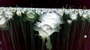 10000 roses cebu