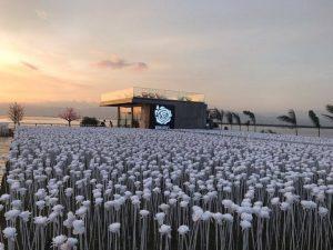 Cebu Roses - 10000