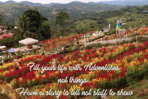 Cebu Flower Quote - Travelers Quote