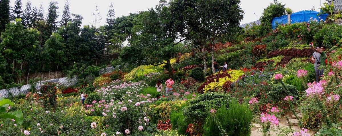 Buwakan ni Alejandra - Cebu Flowers - Balamban Flowers