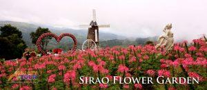 Cebu Sirao Flower Garden