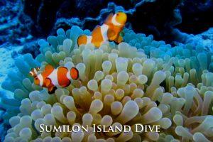 Sumilon Island Corals