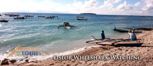 Oslob Whaleshark Watching