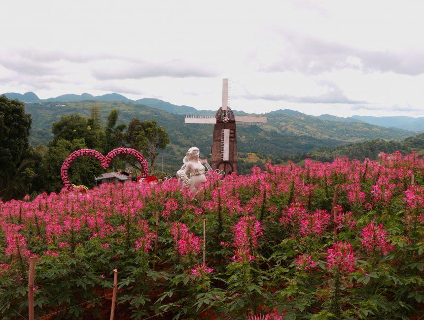 Cebu Sirao Garden
