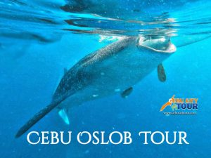 Cebu Oslob Tours