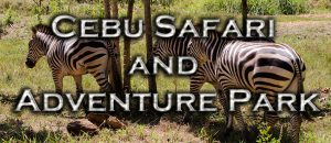 Cebu-Safari-Banner